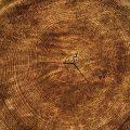 La meublerie en bois, un nouvelle tendance en décoration.